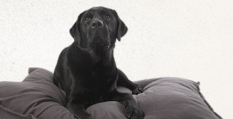 Lex & Max   de zachtste bedden voor hond & kat