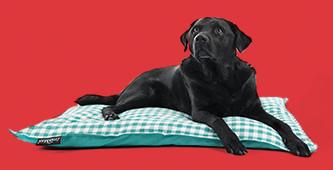 40% korting op Lex & Max hondenkussens