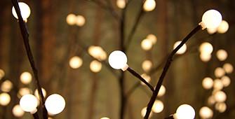 Lichttakken & bomen