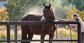 Het beste paard van stal halen