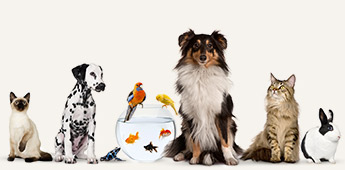 Alles voor de dierenvriend