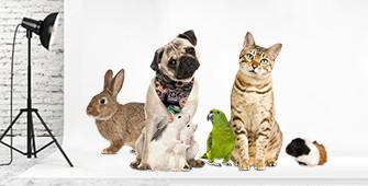 Is jouw huisdier een topmodel?