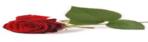 Lees meer over deze verkoper: roos[kat]